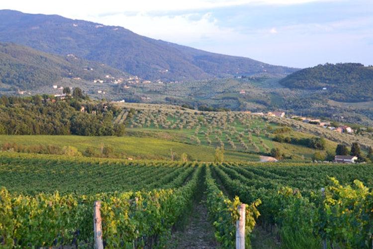 Frescobaldi vineyards before the Consuma for Casentino
