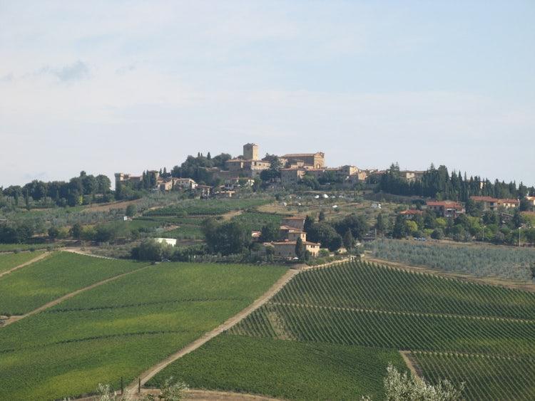 Vineyards & olive groves in Chianti