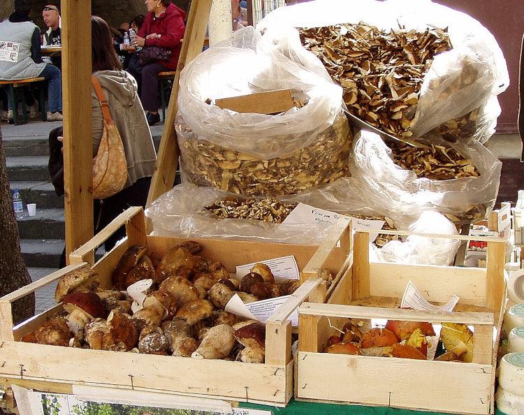 Top 5 Fall Activities: Mushroom Hunting