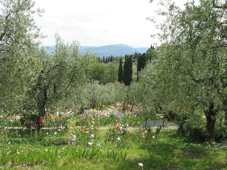 Iris Garden: an outdoor visit while exploring Florence