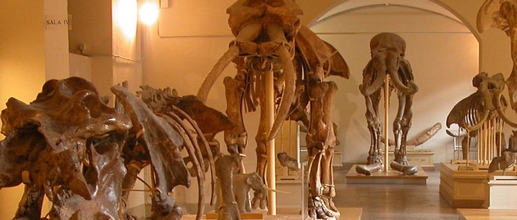museum of naturalu history
