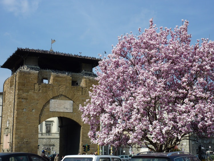 Piazza Beccaria: First signs of Spring
