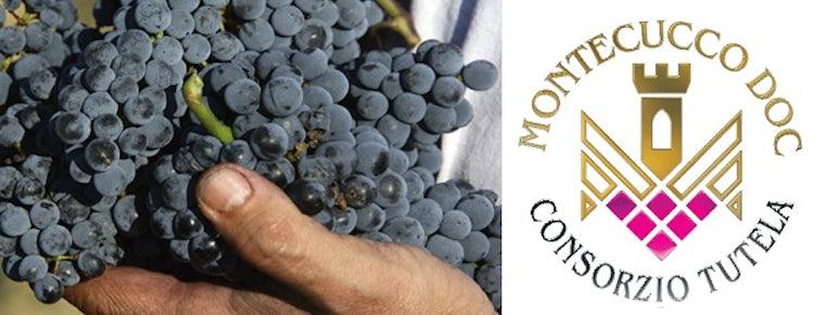 The wines of Montecucco DOC
