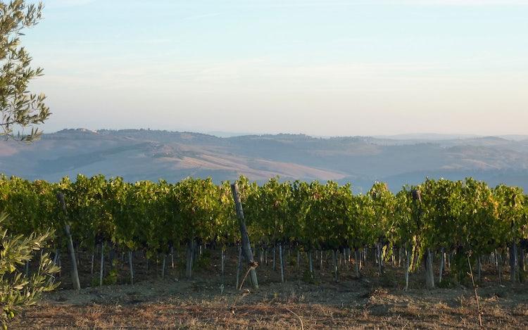 Brunello Wine Itinerary near Montalcino
