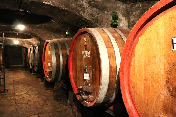 Wine tasting Florence, Italy: top winter tours