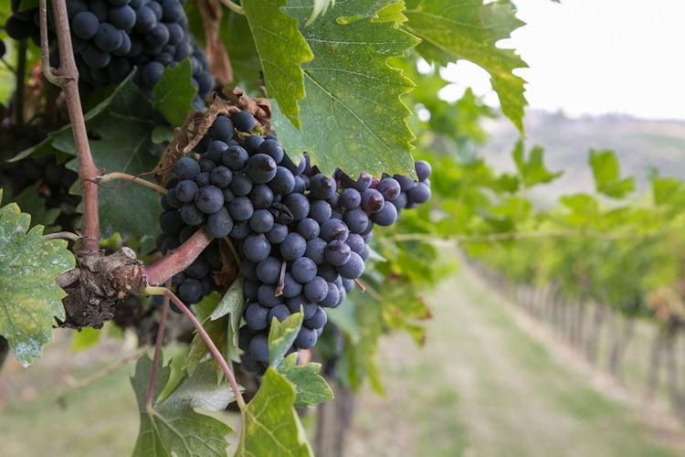 Brunello Wine Itinerary close to Montalcino
