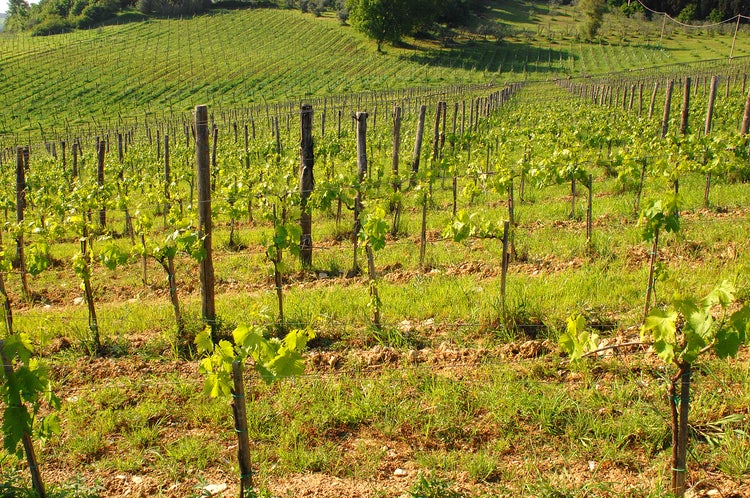 La Lastra Vineyards: The Ultimate Wine Experience