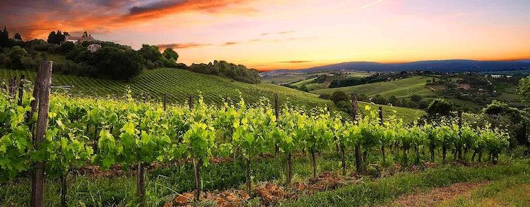 La Lastra in San Gimignano, and their organic vernaccia white wine