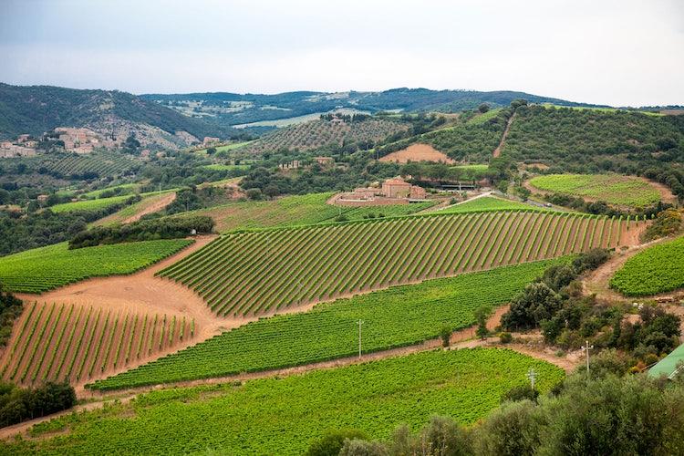 Chianti Classico zone as established by the Grand Duke