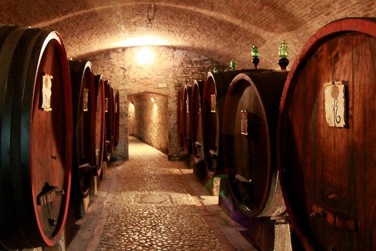 Le botti per la fermentazione del nuovo vino.